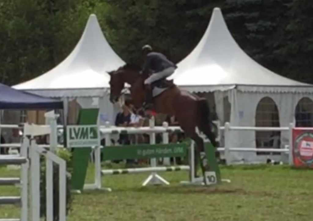 Holsteiner Pferd Camelot von Casall (Caretino, Kira) und Tamara (Calato, Indira)