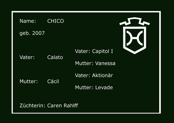 Holsteiner Pferd Chico von Calato (Capitol I, Vanessa) und Cäcil (Aktionär, Levade)