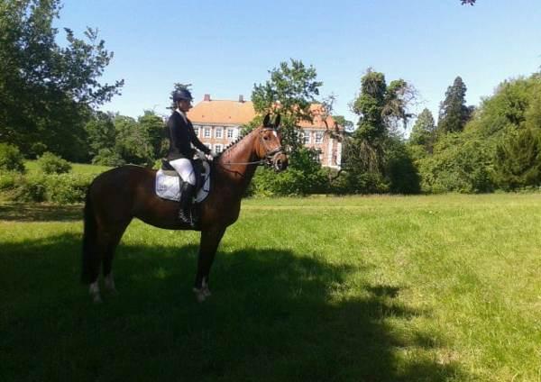 Holsteiner Pferd Pauline von Calato (Capitol I, Vanessa) und Cäcil (Aktionär, Levade)