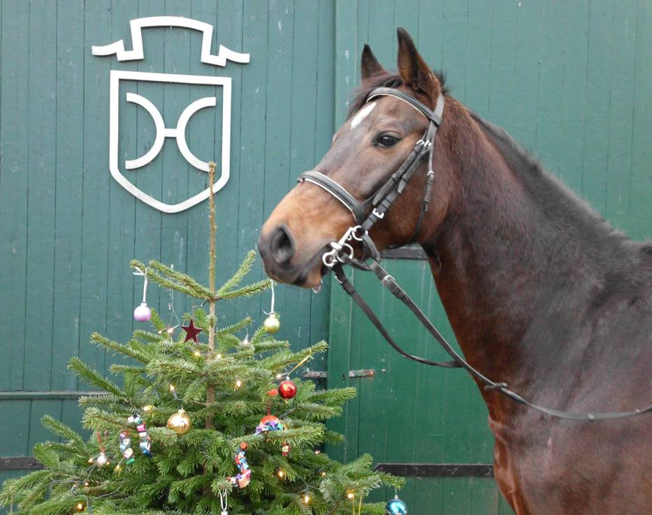 Pferd mit Weihnachtsbaum