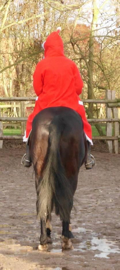 Pferd mit Weihnachtsmann